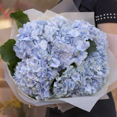 Blue Hydrangea Bouquet for all occasions like New Born Baby Boy, Love and Romance, Thanks Giving, Congratulations, Birthdays and more.
