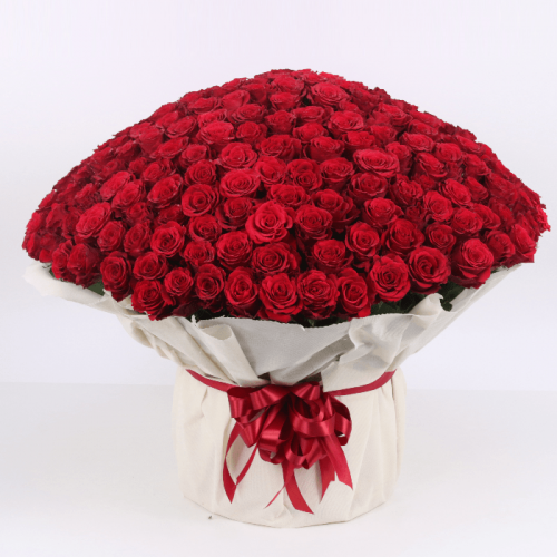 Bouquet of 500 Red Roses