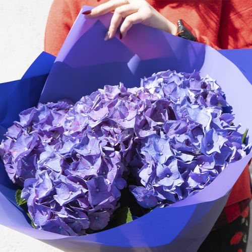 Purple Hydrangeas in a bouquet for all occasions like Birthdays, Welcome Back, Anniversary, Romance.