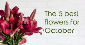 The 5 best flowers for October